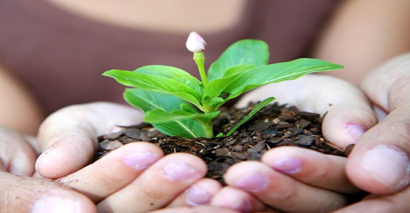 Transfering plant in soil